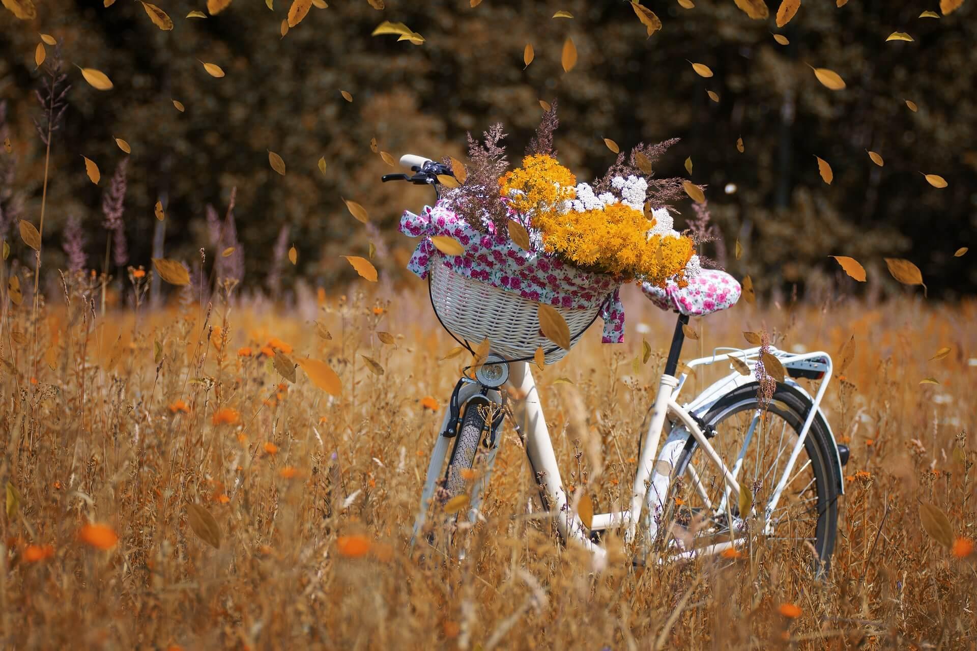 Graeser Im Herbst Blueten