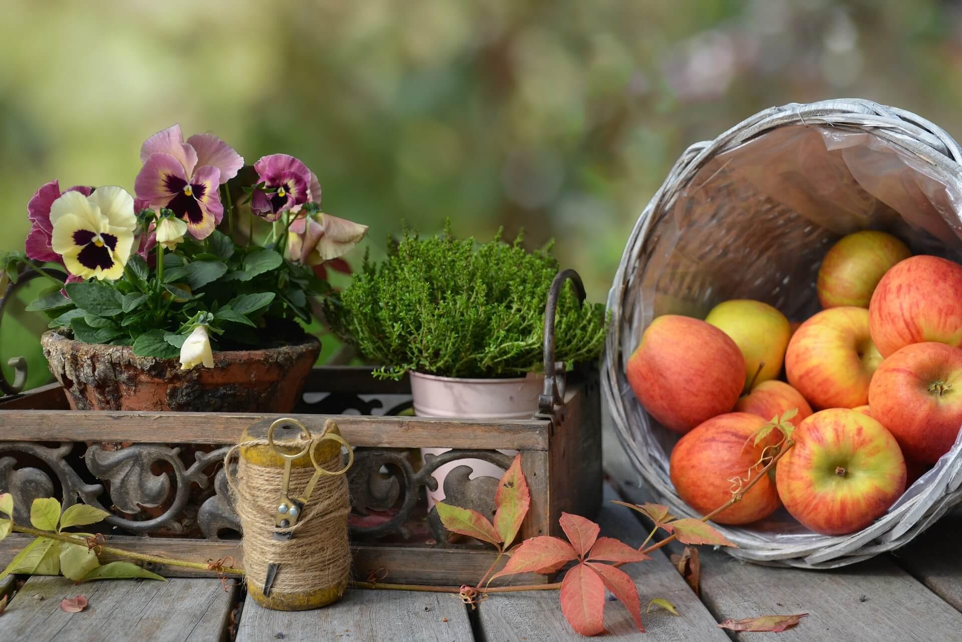 Herbst Aepfel Viola Hebe Wein