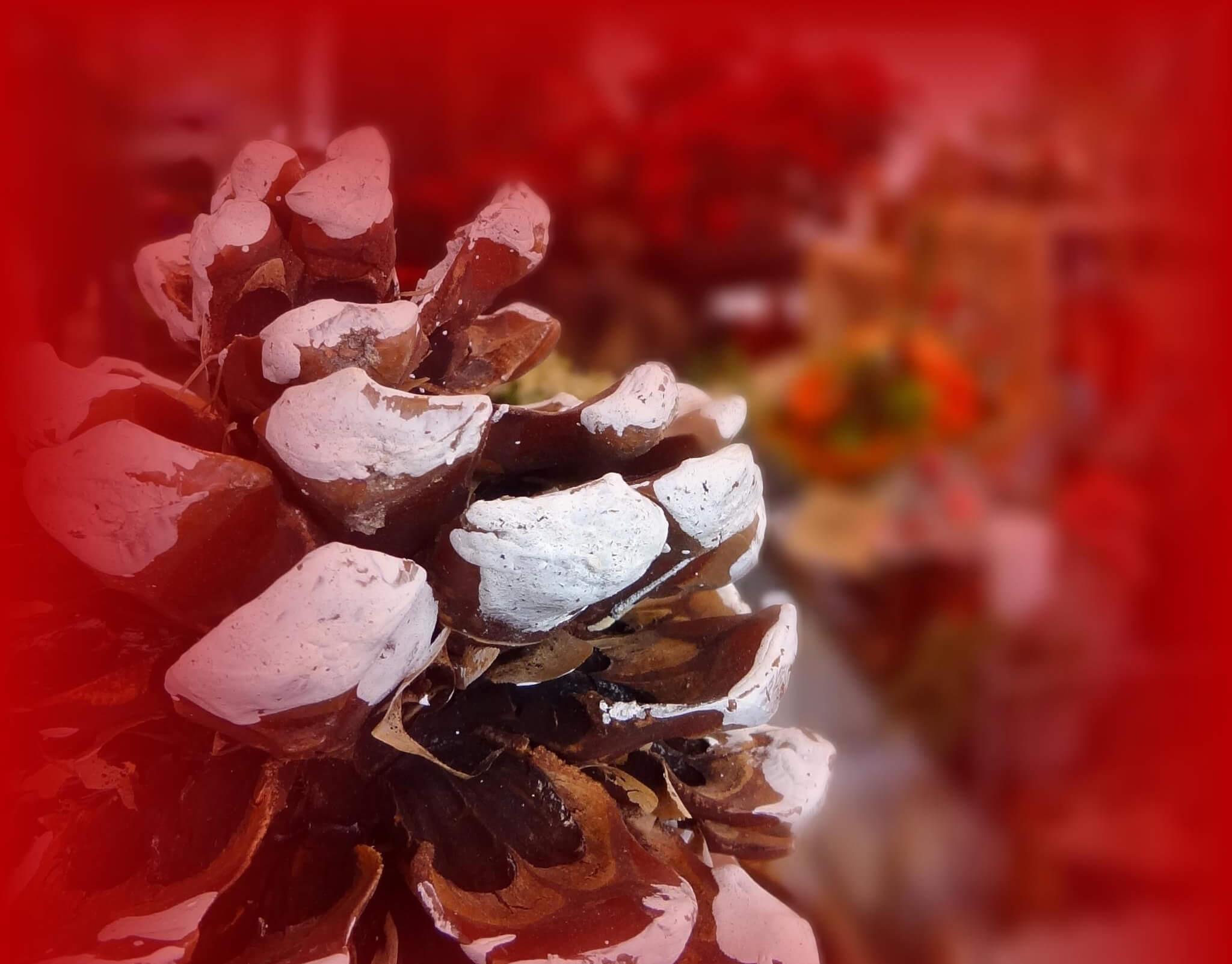 Weihnachts Zapfen Quer